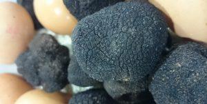 Huevos trufados. Aprovecha guardar la trufa negra con huevos para que absorvan todos su aroma.