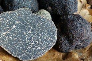 trufa negra tuber melanosporum